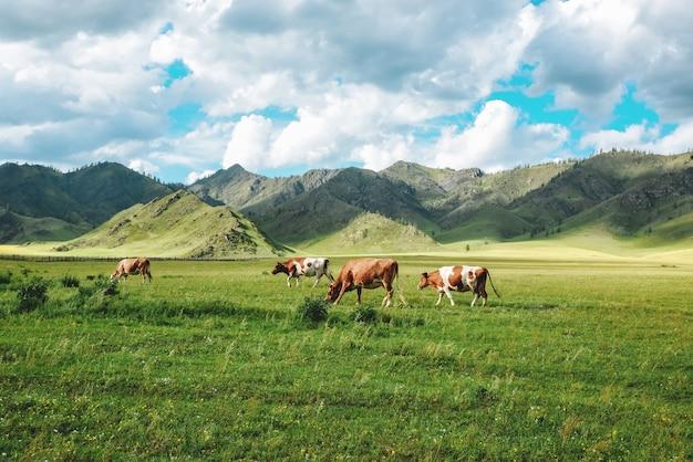 Idílico paisaje de pastos de verano con vacas en las montañas