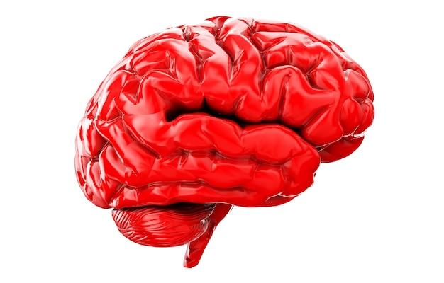 Ilustración 3d de la vista frontal del cerebro humano aislado en blanco