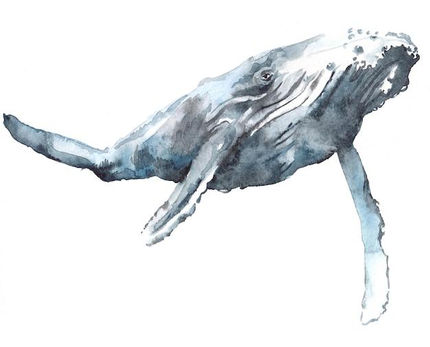 Ilustración acuarela de una ballena azul