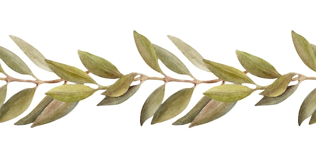 Ilustración acuarela de un borde con hojas, frutos y aceite de oliva. aceite y hierbas aromáticas.
