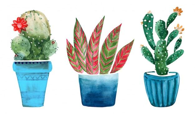 Ilustración acuarela de cactus en macetas.