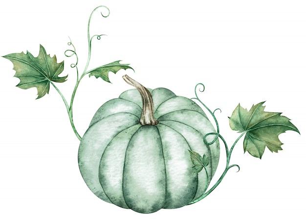 Ilustración acuarela de calabaza azul con hojas verdes