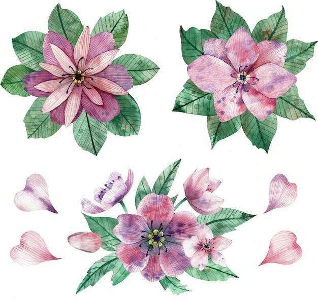 Ilustración acuarela de composiciones y elementos de flores de color rosa