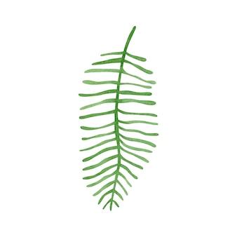 Ilustración acuarela de hojas tropicales aisladas sobre fondo blanco