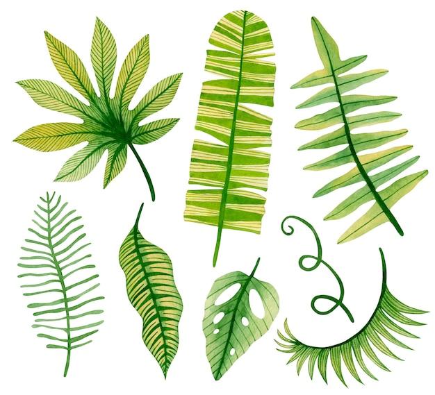 Ilustración de acuarela de hojas tropicales aisladas sobre fondo blanco