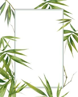 Ilustración acuarela pintura de hojas de bambú, sobre fondo blanco.