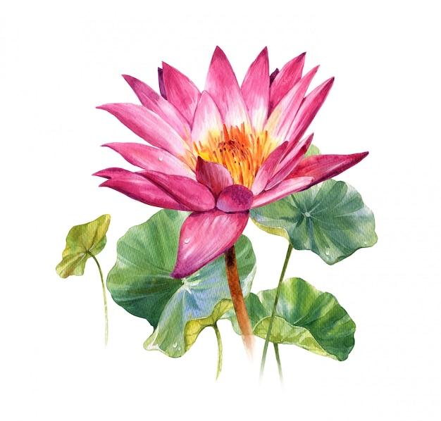 Ilustración acuarela pintura de hojas y loto en blanco
