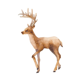 Ilustración de ciervos acuarela. silueta de animales de bosque aislado sobre fondo blanco.