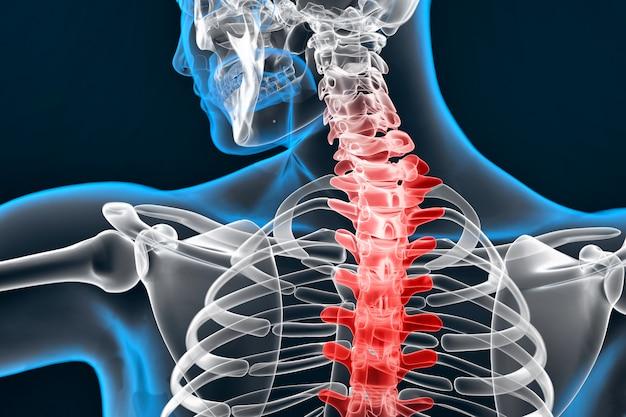 Ilustración de la columna vertebral humana