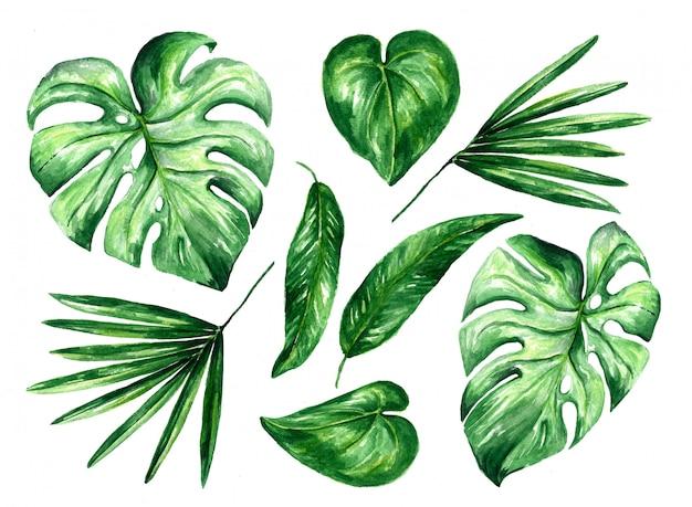Ilustración floral tropical acuarela