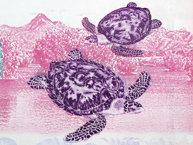 Ilustración de tortuga carey de dinero venezolano