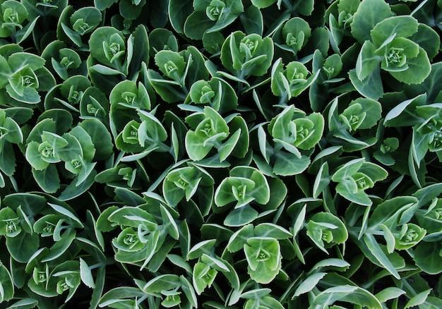 Imagen abstracta de hojas en la naturaleza