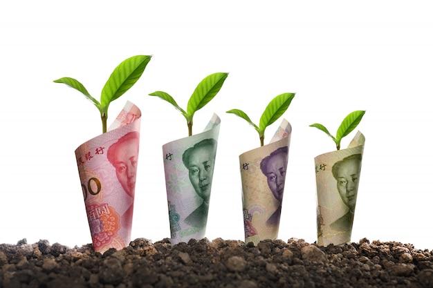 Imagen de billetes enrollados alrededor de las plantas en el suelo para negocios, ahorro, crecimiento, económico aislado en blanco