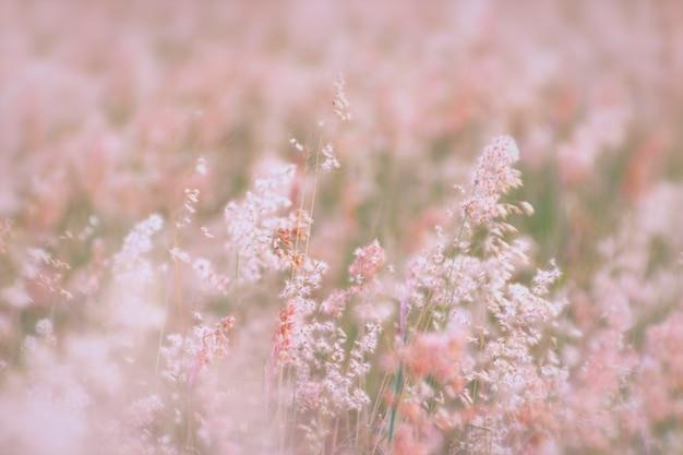 La imagen borrosa del fondo natural con la hierba florece en sombra rosada.