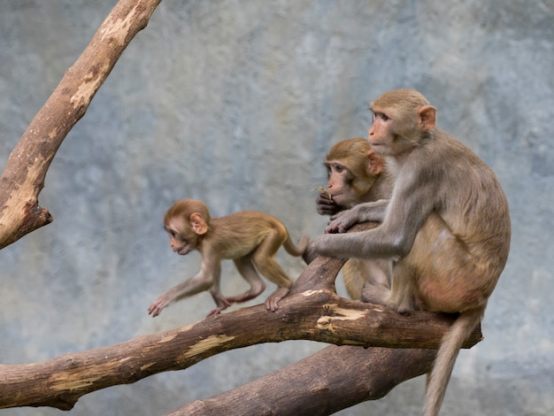 Imagen de familia mono sentado en una rama de árbol.