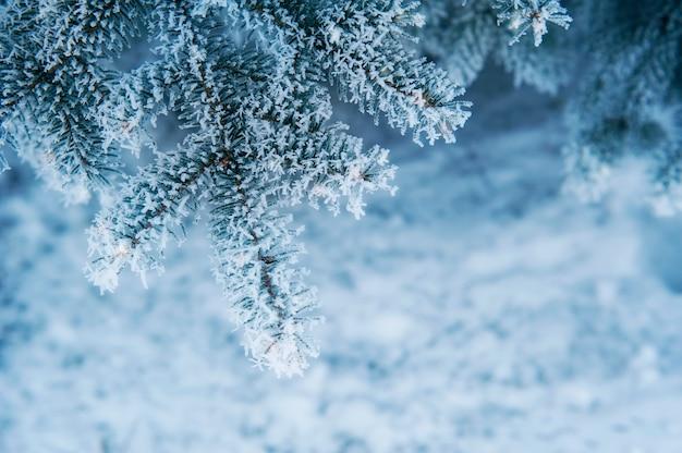 Imagen del fondo del árbol de abeto nevado, fondo natural abstracto, rama de árbol de pino cubierto de aros, frontera de coníferas, hermosa temporada de invierno, tarjeta de felicitación de año nuevo, vacaciones de navidad