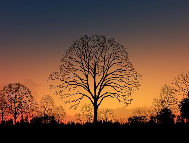Imagen hermosa del paisaje con la silueta de los árboles en la puesta del sol