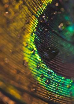 Imagen macro de pluma de pavo real con gotas de agua
