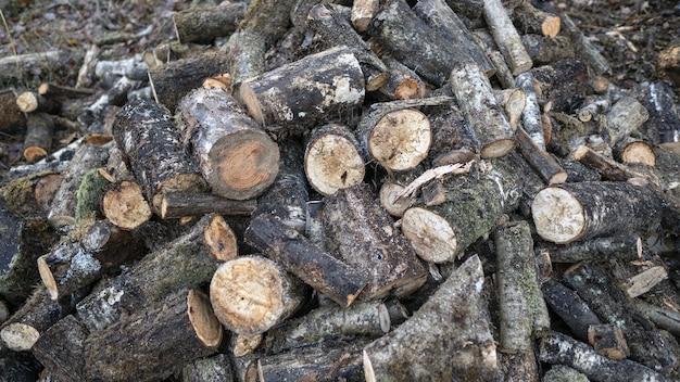Imagen de maderas de árboles en el suelo rodeadas de hojas y ramas