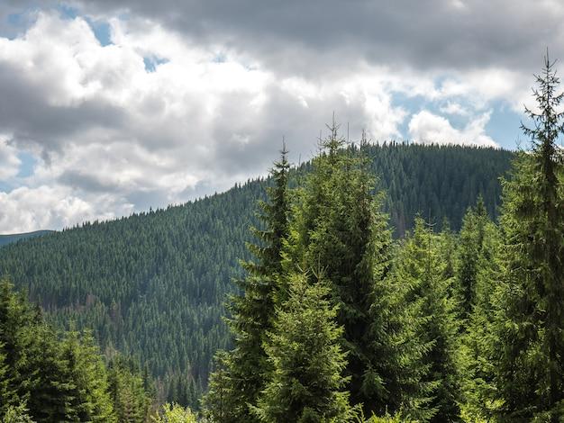 Imagen de montaña con pinos y nubes en un día soleado de verano