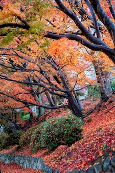 Imagen de paisaje de hojas de árbol de colores rojo y amarillo en otoño