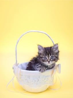 Imagen de pequeño gatito esponjoso lindo en la cesta sobre fondo amarillo brillante para la tarjeta de felicitación de cumpleaños vertical