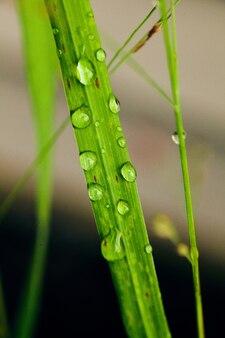 Imagen de planta de hierba con diminutas gotas de agua de rocío