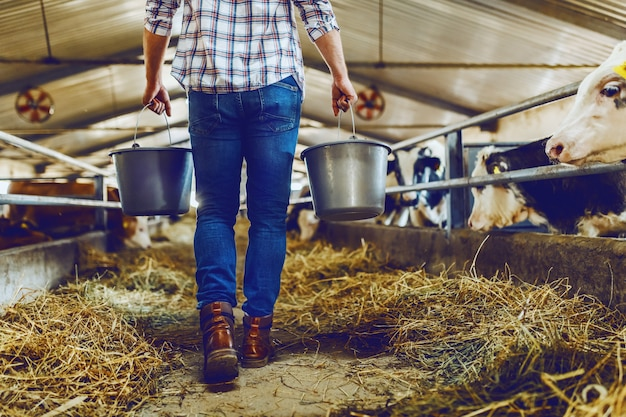 Imagen recortada de apuesto granjero caucásico sosteniendo cubos con leche mientras camina en el establo.