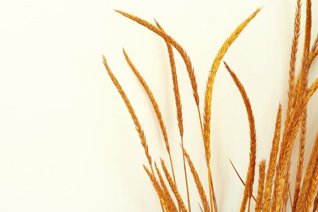 Imagen recortada de ramas decorativas de plantas secas