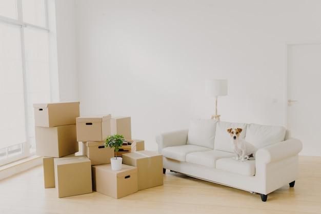Imagen de sala grande y luminosa con pila de paquetes y planta en maceta, cómodo sofá blanco y perro de pedigrí