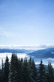 Imagen vertical de colinas cubiertas de nieve y vegetación bajo la luz del sol durante el día