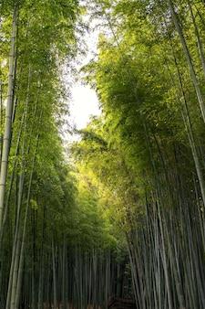 Imagen de vista de ángulo bajo del bosque de bambú en arashiyama, japón