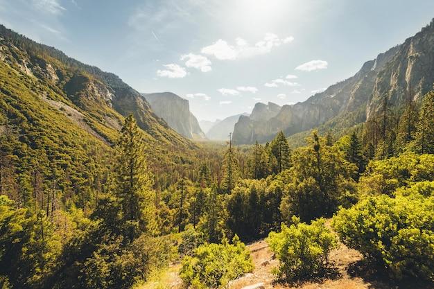 Impresionante paisaje asombroso de un hermoso bosque en el campo