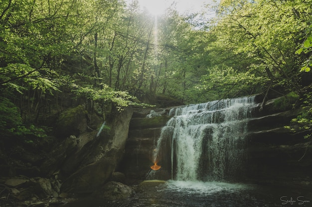 Impresionante toma de una pequeña cascada en un bosque con el sol brillando a través de los árboles