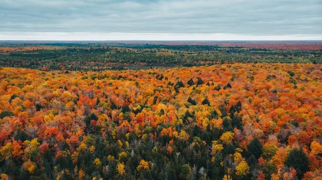 Impresionante vista aérea de un bosque otoñal en hermosos colores