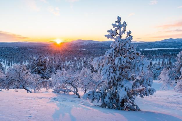 Impresionante vista de un bosque cubierto de nieve durante la puesta de sol en noruega