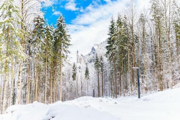 Impresionante vista del bosque y las montañas cubiertas de nieve bajo el cielo nublado