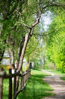 Impresionante vista de la naturaleza del bosque verde.