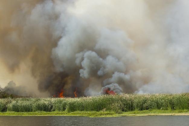 Incendio forestal en la naturaleza.
