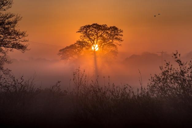 Increíble bosque y la puesta de sol