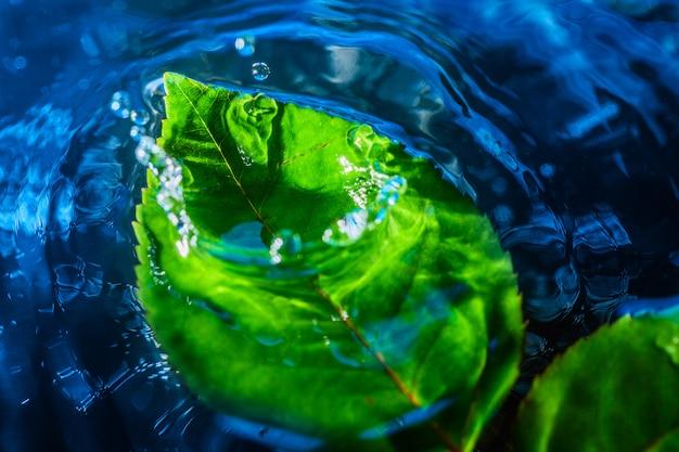 Increíble disparo abstracto de salpicaduras de gota de agua cerca de la hoja verde en el agua