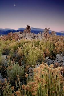 Increíble foto de diferentes plantas que crecen en un paisaje de montaña durante una puesta de sol