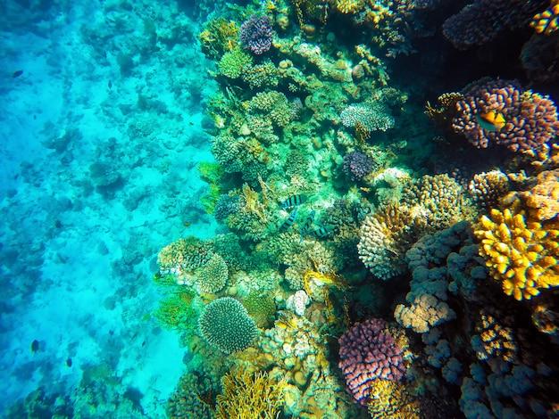 Increíble hermosa vista del arrecife de coral y peces en el mar rojo