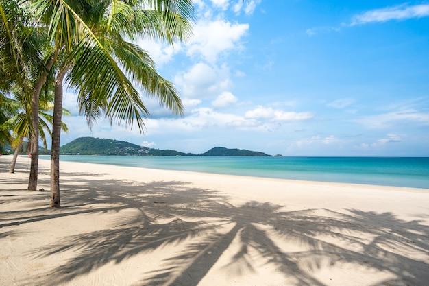 Increíble paisaje de playa de arena con palmeras.