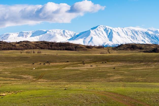 Increíble paisaje de la zona de la estepa con lagos y árboles que se transforman suavemente en montañas con picos nevados. montañas de altai