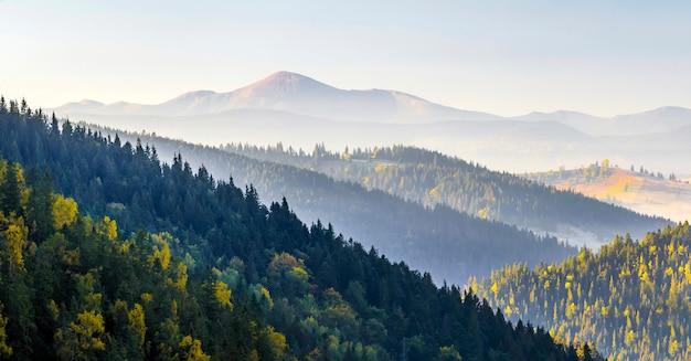 Increíble panorama del amanecer suave en las montañas. picos de las montañas de cerpathian y colinas en otoño sobre las copas de los pinos