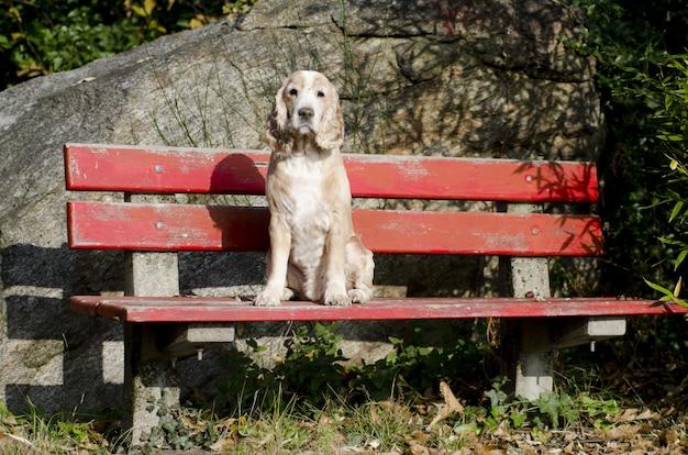 Increíble vista de un cachorro sentado tranquilo en un banco rojo