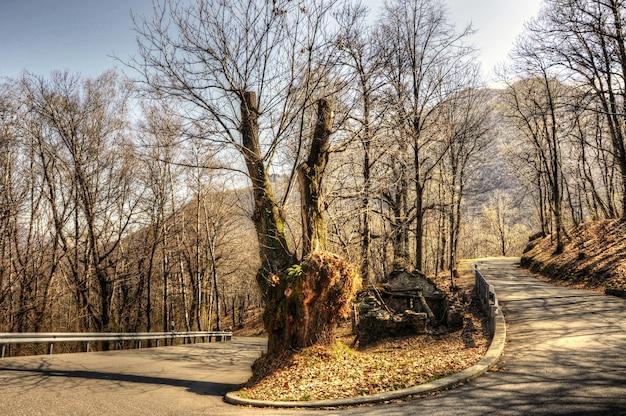 Increíble vista de la carretera de montaña rodeada de árboles y hojas de naranja de la hermosa temporada de otoño