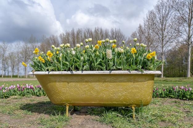 Increíble vista de una vieja bañera llena de hermosas flores en un campo