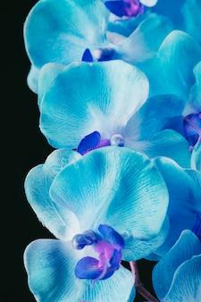 Increíbles flores azules frescas